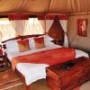 Elephant Bedroom3