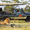 Elephant Pepper Mara Camp daily game drives