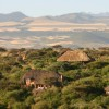 Lewa Wilderness7